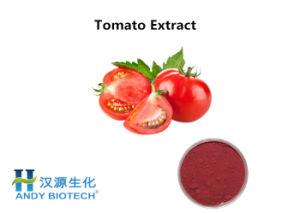 Lycopène naturel 10 % Extrait de tomate poudre antioxydant de haute qualité