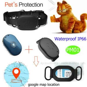 개 또는 고양이 안전 담 Pm01를 가진 방수 반대로 분실된 GPS 추적자 장치