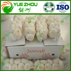 10kg 20kg de Zak die van het Netwerk Nieuw Knoflook met Vers Normaal Zuiver Wit Knoflook van China inpakken