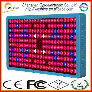 Il potere eccellente 1200W Chloroba2 LED si sviluppa chiaro con lo spettro completo