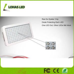 100HP X 10W 1000W Full Spectrum planta crescer a luz de LED