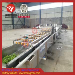 Linea di trasformazione di /Vegetable della frutta con il taglio di lavaggio che asciuga la macchina di /Packing