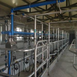 40 places Salon traire la vache automatique du système de mesure électronique