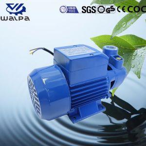 La bomba de agua potable para la jardinería 1CV Monofásico impulsor de latón
