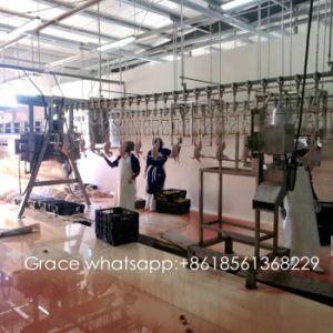 Geliebte Alle Produkte zur Verfügung gestellt vonQingdao Hapy Poultry @AH_72
