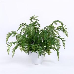 Искусственные папоротника растений