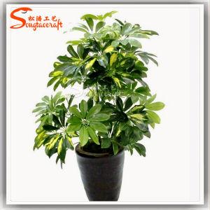 2015 Última Schefflera Arboricola Plantas Bonsai Tree Artificial