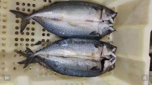 Новые приземлился мороженой рыбы Тихого океана скумбрии морепродукты