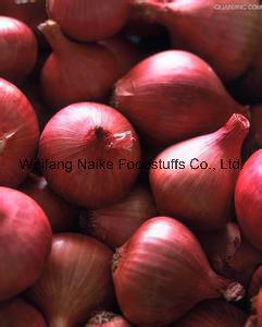 Nouvelle culture de légumes à l'oignon frais