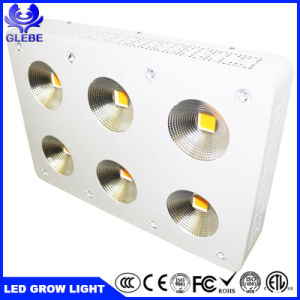 900W COB Full Spectrum LED crescer para instalações interiores