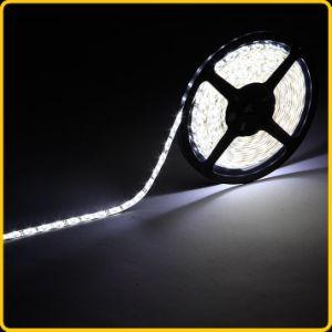 IP65 striscia flessibile di bianco 5050 LED per Lighitng domestico