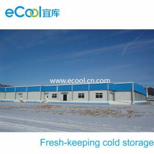 Kundenspezifisches Gemüse-und Frucht-frisches haltenes kaltes Lager
