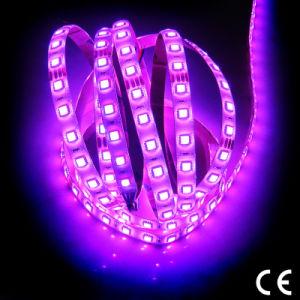 Control DMX RGBW SMD 5050 de 3528 Tiras Flexibles LED Lighting