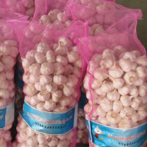 Neues Getreide-frischer weißer Knoblauch vom zuverlässigen Lieferanten
