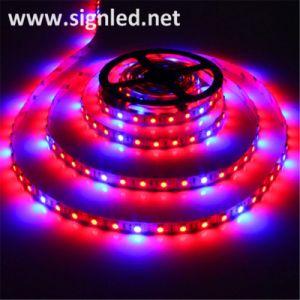 Streifen-Beleuchtung der Weihnachtsbaum-Dekoration-bunte LED der Zeichenkette-Light/LED