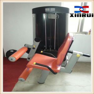 Professional Body building Fitness Trainer Rorary Torso (XH14)