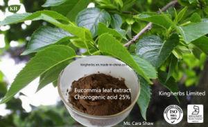 Extrato de folha Eucommia, ácido Chlorogenic 5%, 98% por HPLC