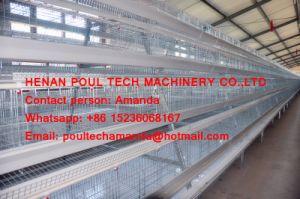 Het Landbouwbedrijf van het Gevogelte van Ghana - de Kooi van de Kooi & van het Gevogelte van de Kip van de Batterij & de Kooi van de Laag voor de Productie van het Ei met de Automatische Machine van de Inzameling van het Ei