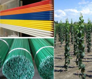 庭ワイヤーは紫外線抵抗力があるプラントガラス繊維の棒を杭で囲う
