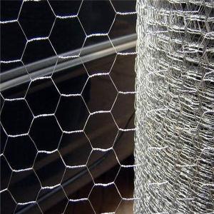 Rete metallica esagonale rivestita di plastica del pollo di vendita calda