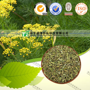 Naturale e Top Grade Food Spice Fennel
