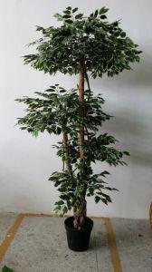 Alta qualità dell'albero artificiale Gu1468052158559 del Ficus delle piante