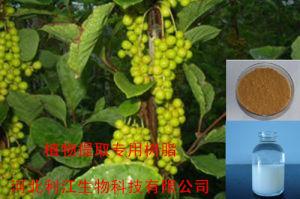 Ab-8 Macroporous Hars van de Adsorptie die voor het Uittreksel van Mao wordt gebruikt Dongqing (ab-8)