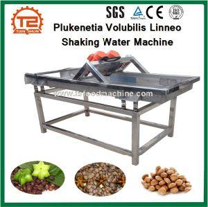 Equipamentos de Processamento Plukenetia Volubilis Linneo e Plukenetia Volubilis Linneo Máquina com agitação