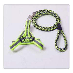 Collar de perro de Nylon y correa de productos PET