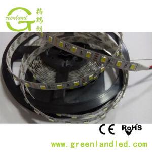 DC24V 5050 SMD indicatori luminosi di striscia della garanzia 60LED/M 6500K LED da 2 anni