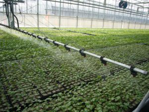 Organische Meststof van het Aminozuur van 80%, In water oplosbare 100%, Verklaarde Omri