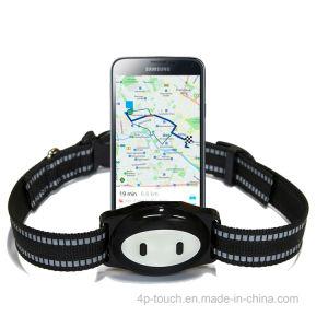 Aprovado pela CE Animal/Pet Rastreador GPS com WiFi posição D79