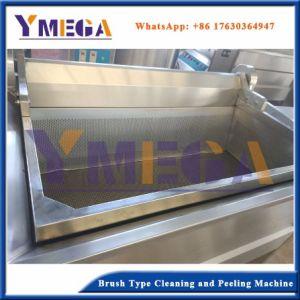 Fécula de batata doce//limpeza e lavagem de cenoura e Peeling máquina com rolos de escova