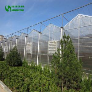 Una buena calidad de policarbonato resistente a rayos UV para la siembra de hortalizas de invernadero