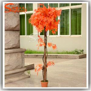 China Artificial Alimentação Maple Plantas Bonsai Tree