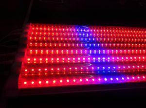La pianta rosso-chiaro di colore LED del tubo T8 si sviluppa chiara coltiva l'indicatore luminoso