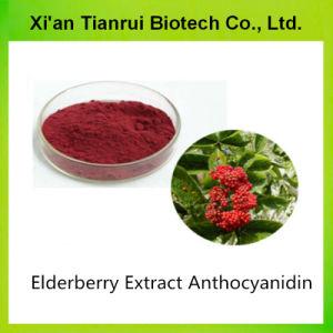 Высокое качество Elderberry выдержка 5% Anthocyanidin порошок