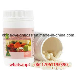 쉽의 도매 본래 규정식 환약 체중 감소 (OEM는 환영받다)