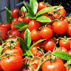 Het organische Aminozuur van de Meststof 52% Poeder