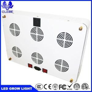 China fabricante por grosso de plantas de estufa barata crescer Lamp900W LED SABUGO crescer Light