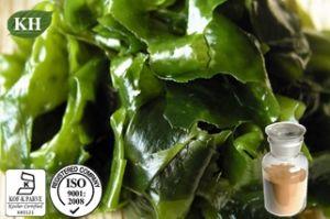 Venda de Fucoxanthin quente, Extrato de alga marrom