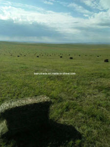Het Voer van het Gras van de Schapen van het paard voor Paard