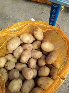 Nova colheita de batata da New Holland fresco com boa qualidade