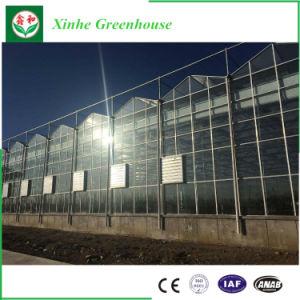 Estufa de vidro econômica de grandes dimensões com sistema de ventilação para venda
