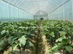 Meststof van Solulble van het water de Organische en Chemische in Landbouw