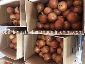 Les chinois d'oignons jaunes fraîches Un-Peeled Yunnan