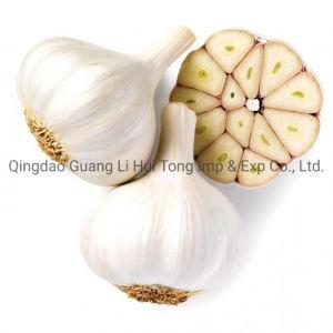 Venta caliente 2020 Nueva cosecha mejor orgánicos naturales frescos de color blanco puro ajo de China