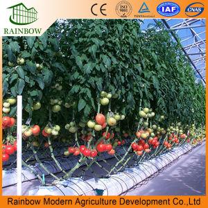 Hydroponicsシステムが付いているマルチスパンPoのフィルムのトマトまたはきゅうりの/Flowerのプラスチック温室