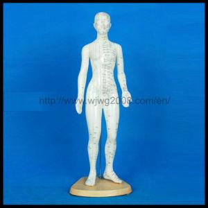 Droits de modèles d'acupuncture du corps (Femme-M-1-48)