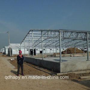 Estructura de acero de la luz de la construcción de la granja de aves de corral de pollo